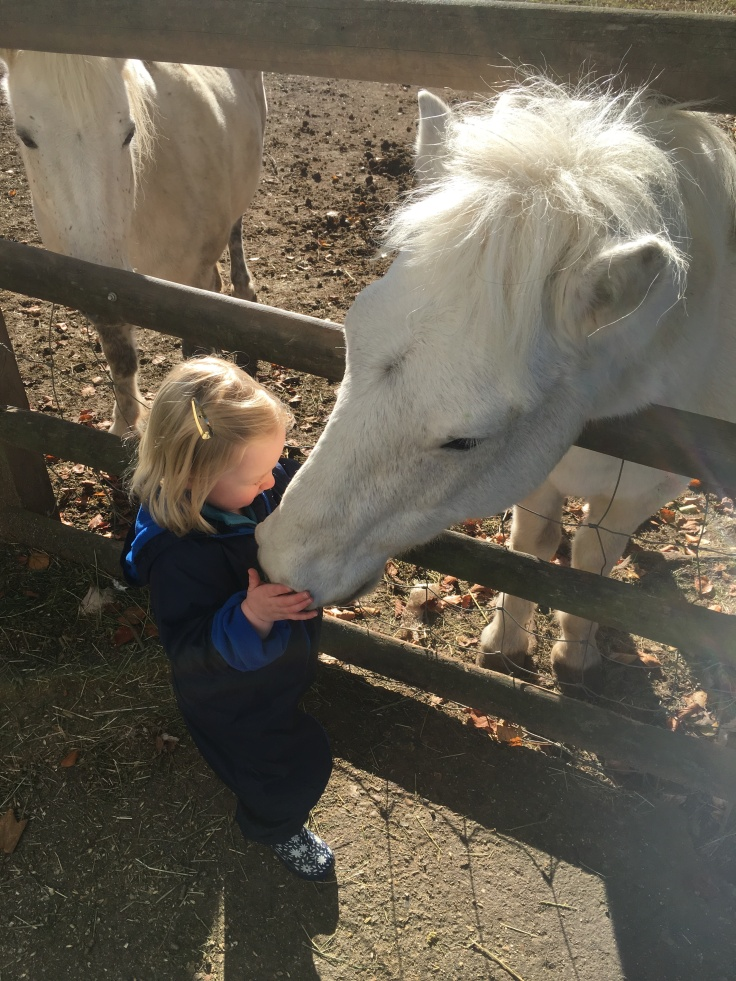Bean with horse
